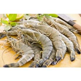 Gamberi Black Tiger per tempura: come si cucinano e le caratteristiche